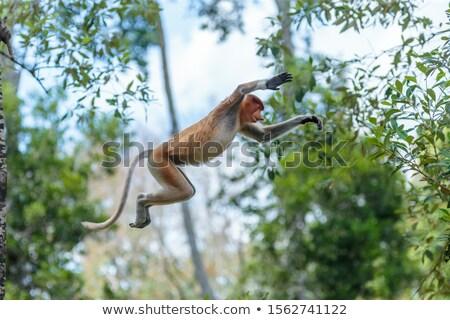 ázsiai majom fa Sri Lanka víz természet Stock fotó © kb-photodesign