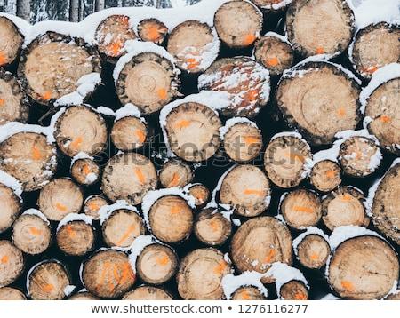 Köteg alsónadrágok tél természet hó fák Stock fotó © meinzahn