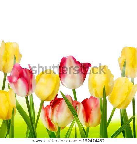 világoszöld · tulipánok · köteg · rózsaszín · virág · természet - stock fotó © beholdereye