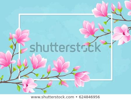 szett · sakura · Japán · cseresznye · ág · eps - stock fotó © beholdereye