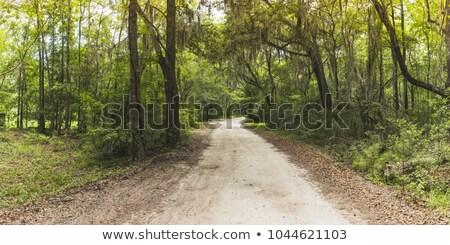 Gyönyörű vidéki út Grúzia autó üres fényes Stock fotó © joyr