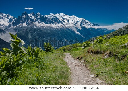 glacier traverse in Mont Blanc Stock photo © Antonio-S