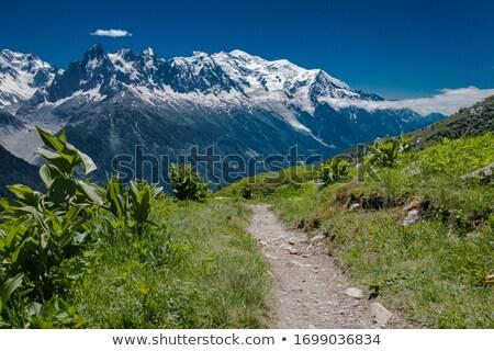 glacier traverse in mont blanc stock photo © antonio-s