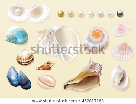 pearl in mussel icon Stock photo © glorcza