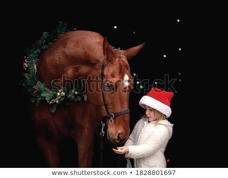 лошади · Норвегия · норвежский · портрет · зима · улыбка - Сток-фото © is2
