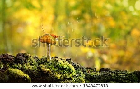 森林 · 菌 · 木の幹 · 新鮮な · 苔 · ツリー - ストックフォト © goce