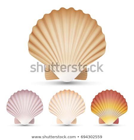 Set of color scallop shell Stock photo © bluering