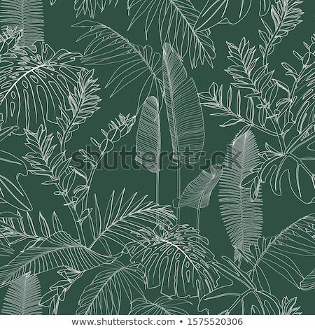 Semplice foresta pluviale illustrazione foresta natura design Foto d'archivio © bluering