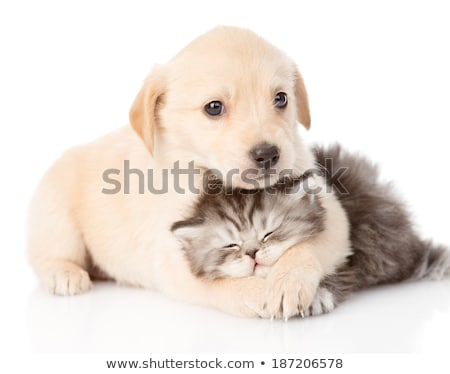Animal friends hug together on isolated background Stock photo © cienpies