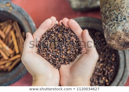 Carnation seasoning in female hands, carnation grains, herbal medicinal herbs, dry carnation grains  Stock photo © galitskaya