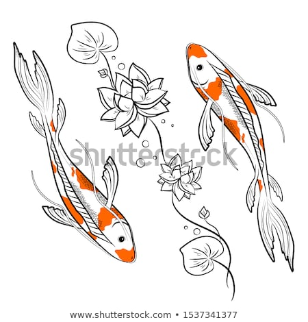 chinese orange koi fish with white spots vector stock photo © pikepicture