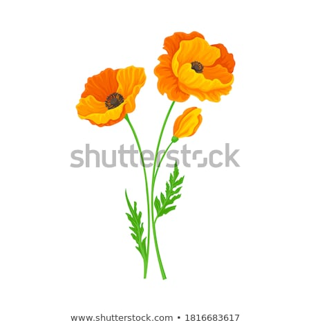 California Poppy Stock photo © hlehnerer