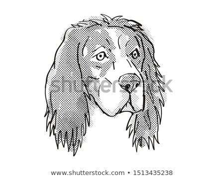 English Setter Dog Breed Cartoon Retro Drawing Stock photo © patrimonio