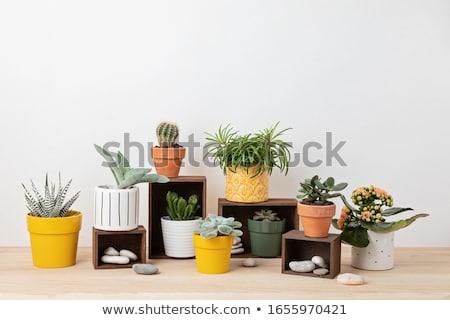 terracotta pot Stock photo © trgowanlock