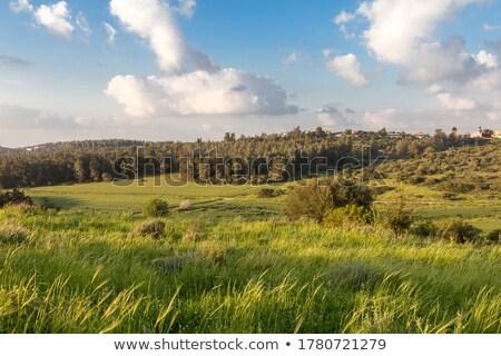 wiejski · wygaśnięcia · kolorowy · dziedzinie · zboża · chmury - zdjęcia stock © RazvanPhotography