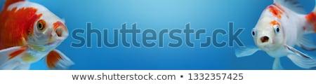 Empty Two fishbowls  Stock photo © designsstock