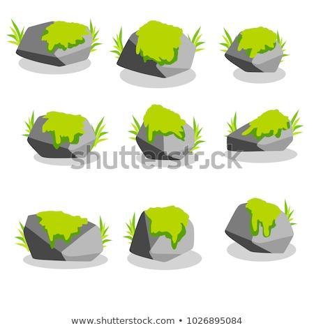 Hoop groene mos geïsoleerd witte Stockfoto © boroda