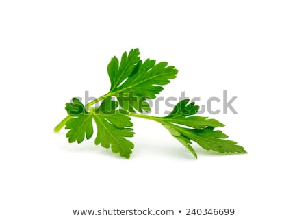 Sprig of parsley Stock photo © crisp