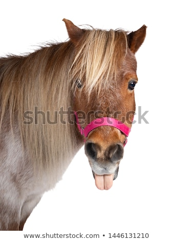 Funny pony Stock photo © perysty