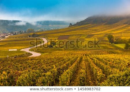 Autunno vigneto scenario idilliaco rurale colorato Foto d'archivio © prill