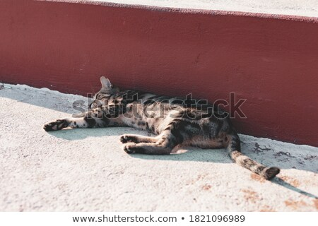 Tabby Cat Asleep on Steps Stock photo © 2tun