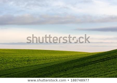 campos · ouro · toscana · casa · verde · caminho - foto stock © meinzahn