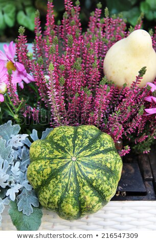 belle · terrasse · automne · fleurs - photo stock © tannjuska