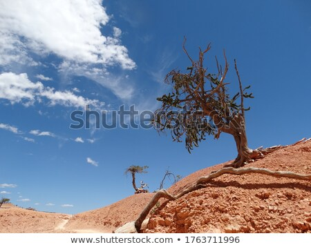 árvore · raízes · deserto · trilha · desfiladeiro - foto stock © emattil