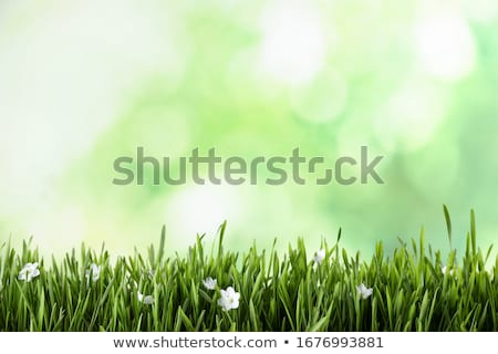 Easter Background With Grass Stock photo © adamson