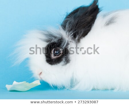 портрет кролик декоративный синий волос Сток-фото © OleksandrO