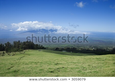 Poli-Poli, Upcountry Maui, Hawaii. Stock photo © iofoto