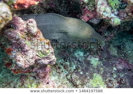 Tenger kígyó rejtőzködik kövek akvárium Stock fotó © wavebreak_media