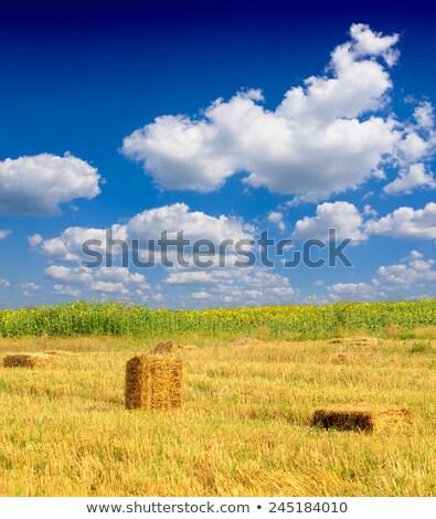 Meule de foin France coucher du soleil Photo stock © Hofmeester