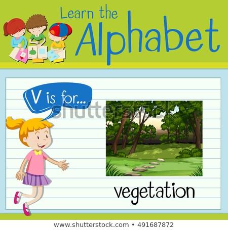 Schreiben Vegetation Illustration Wald Natur Hintergrund Stock foto © bluering