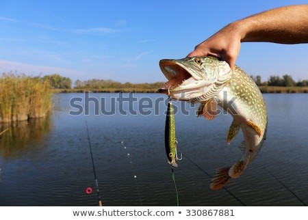 Fish caught by a hook Stock photo © bluering
