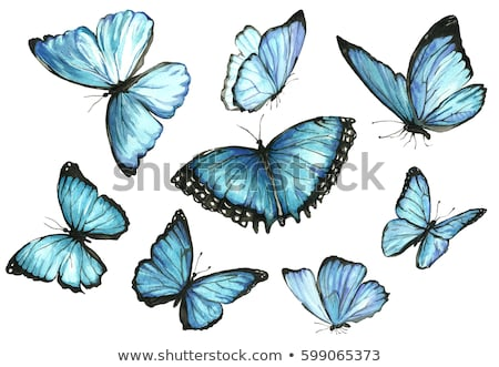 tattoo blue butterfly stock photo © blackmoon979