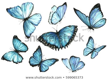 入れ墨 青 蝶 装飾された エレガントな パターン ストックフォト © blackmoon979