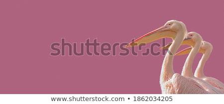 три Баннеры серый Гранж Сток-фото © blackmoon979
