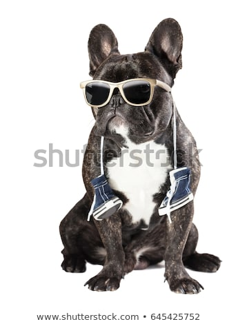 b110b0d6 French bulldog with sneakers on the neck Stock photo © OleksandrO