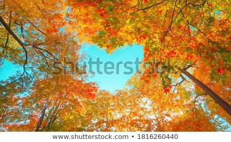 秋 · 雰囲気 · フィールド · 霧 - ストックフォト © guffoto