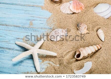 shell and starfish on the pier Stock photo © adrenalina