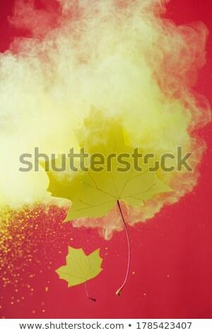 empty holi colors paper set template Stock photo © romvo