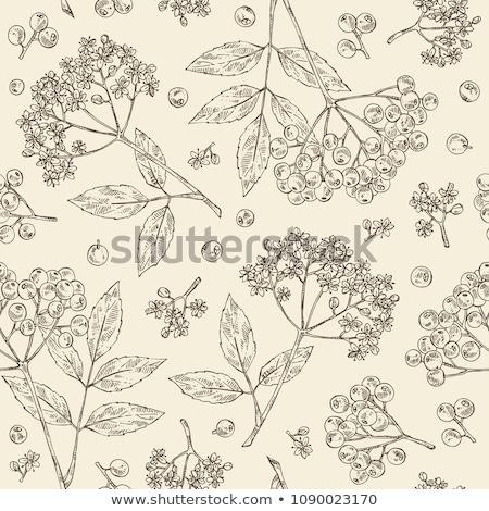 elder flower texture Stock photo © FOKA