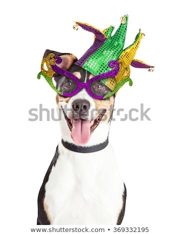 Dogs wearing jester hat Stock photo © colematt