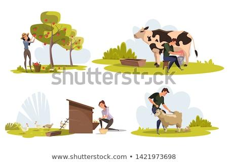 Farmer Feeding Hens on Field Vector Illustration Stock photo © robuart