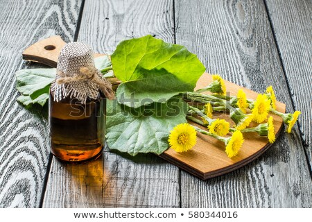 coltsfoot or tussilago farfara flowers in a basket stock photo © madeleine_steinbach