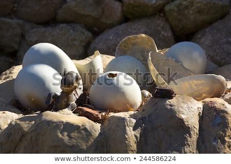 Dinosauro uovo parco illustrazione legno natura Foto d'archivio © colematt