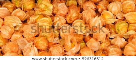 yalıtılmış · beyaz · çiçek · arka · plan · turuncu · kış - stok fotoğraf © grafvision
