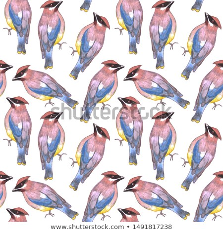 Cedar waxwing or Bombycilla cedrorum bird seamless watercolor birds painting background Stock photo © shawlinmohd