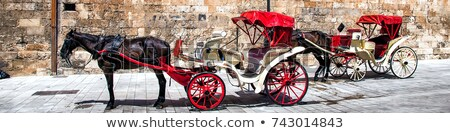 Carriage with horse in Majorca cathedral in Palma Stock photo © lunamarina